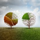 Leaves transferring from a fall tree to a green tree symbolizing climate change divestment