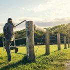 A farmer surveys pastured animals in a green field.