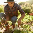 A farmer plants organic vegetables