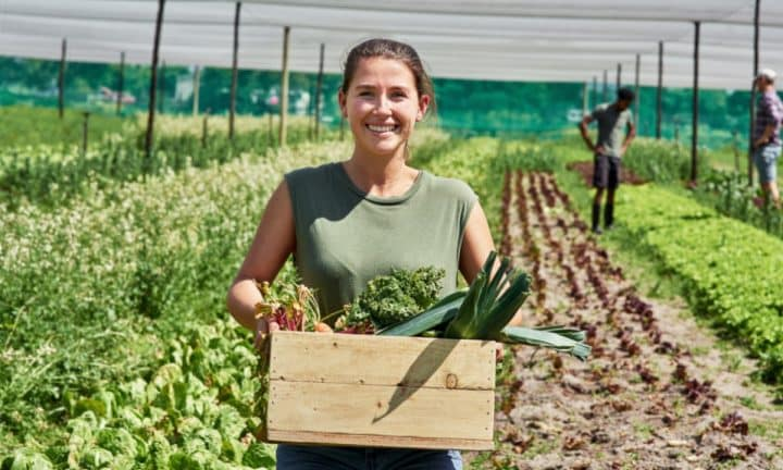 Harvesting many varieties of vegetables on a diversified farm